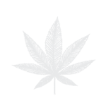 Icon of Cannabis Leaf For Humboldt Apothecary Cannabis Tinctures