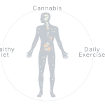 The endocannabinoid system is a biological system in the body that is involved in regulating a variety of physiological and cognitive processes.